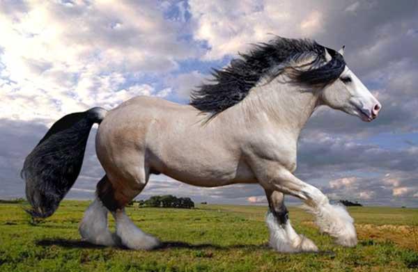 Rain Dance's foals Taskin
