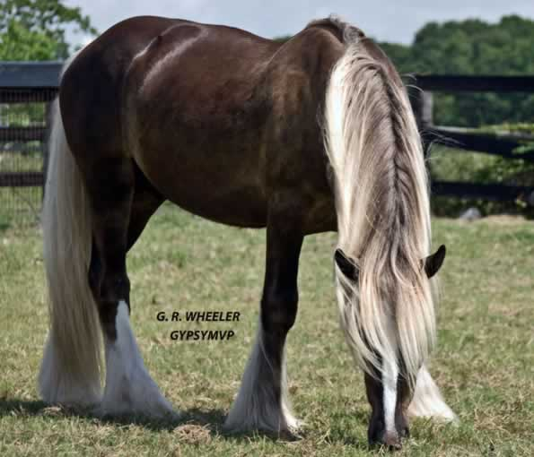 Photos of horses for sale trade or adoption