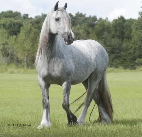 grulla colts for sale