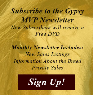 Subscribe to the Gypsy MVP Newsletter