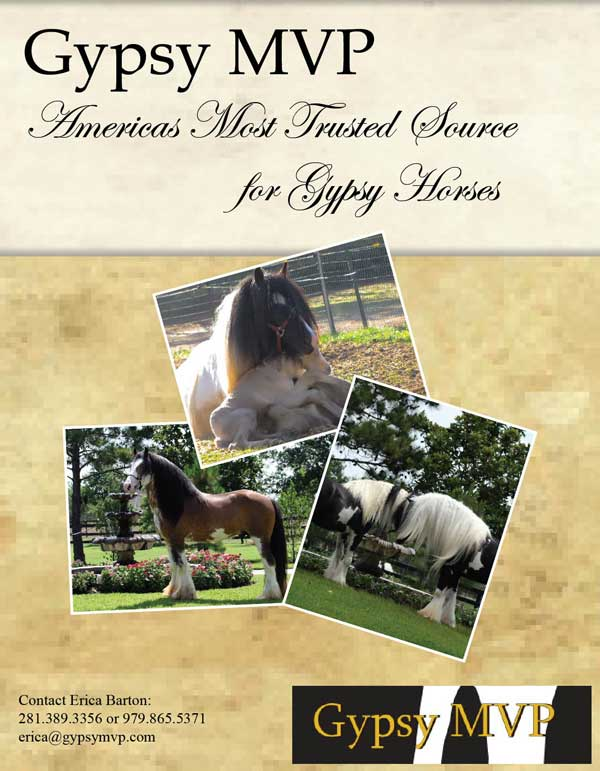 Gypsy Vanner Breeding Information